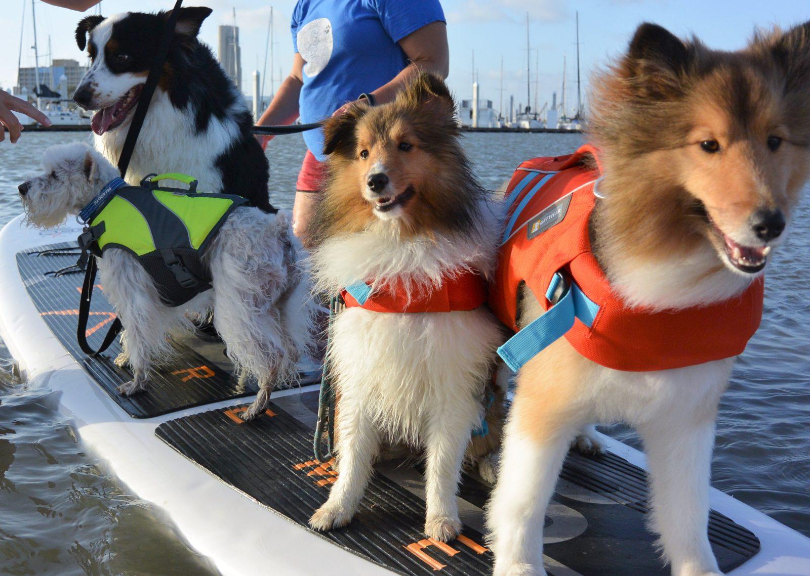 SUP Dogs of Corpus Christi